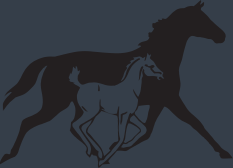 Northernhorse Logo