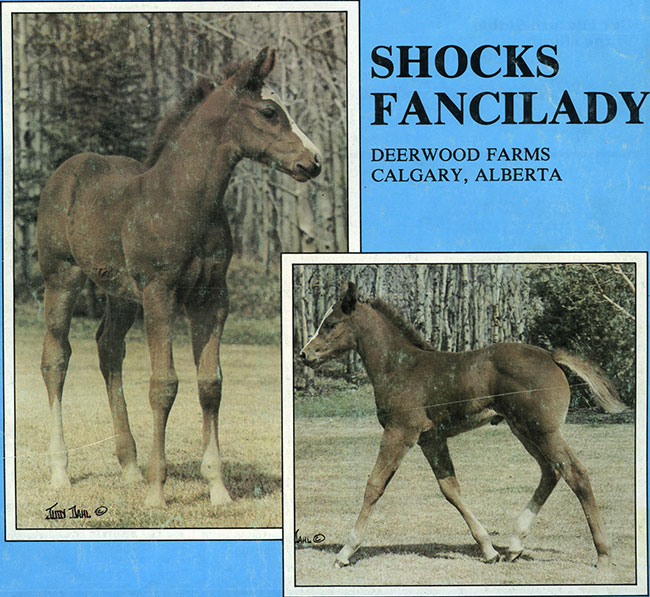 ShocksFancilady1